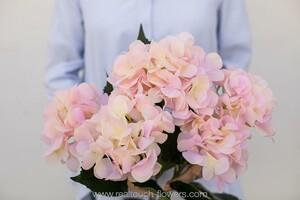 Гортензия кустовая 5 соцветий - Пастель (арт. H-55/18-S-26)