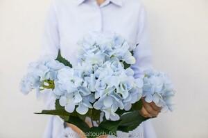 Гортензия кустовая 5 соцветий - Голубой (арт. H-55/18-S-28)