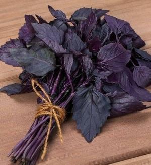 Базилик Арарат фиолетовый