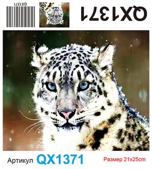 АЧ QX1371, 21х25 см