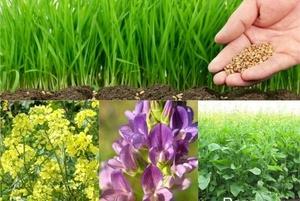 Смесь сидератов для Плодородия почвы 0,5кг /АлыйСад/ /*24шт