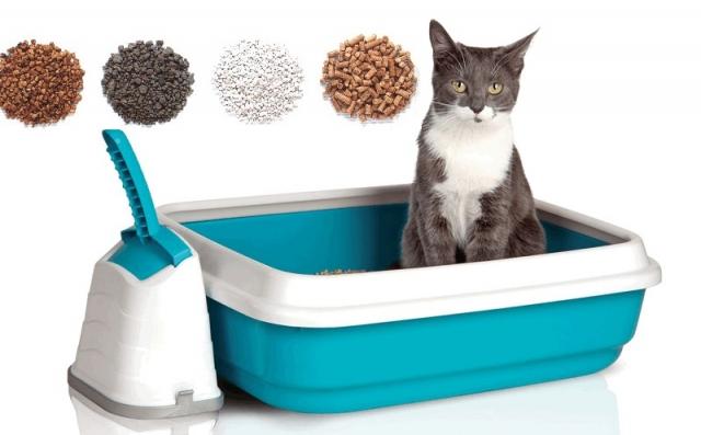 Сибирская кошка -лучший наполнитель для вашего питомца.