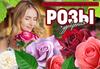 РОЗЫ TopaLovic (Сербия) - Предзаказ Весна 2022 (Агро)