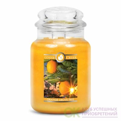 ORANGE GROVE TREE / АПЕЛЬСИНОВАЯ РОЩА (Золотое солнце ярко светит в тропических садах Флориды.)